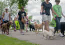 Walk for Wags coming in June