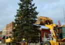 City seeks 2018 Christmas tree