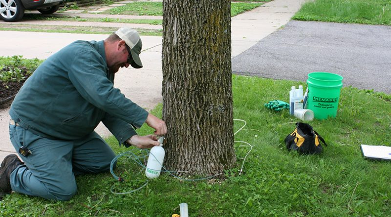 EAB treatment begins in Stevens Point